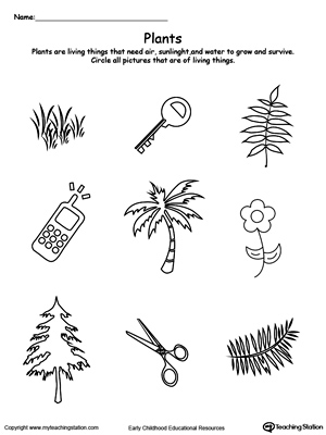 It is a photo of Celery Experiment Printable Worksheet regarding vinegar science project title