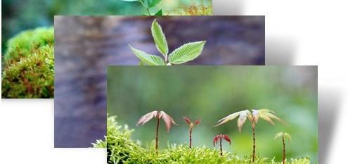 saplings-theme