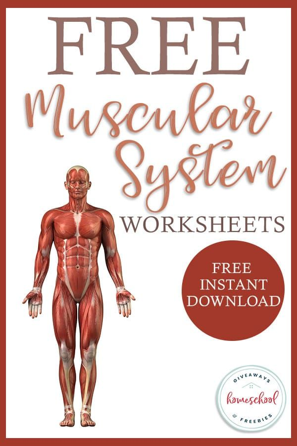 FREE Worksheets for the Muscular System Homeschool Giveaways