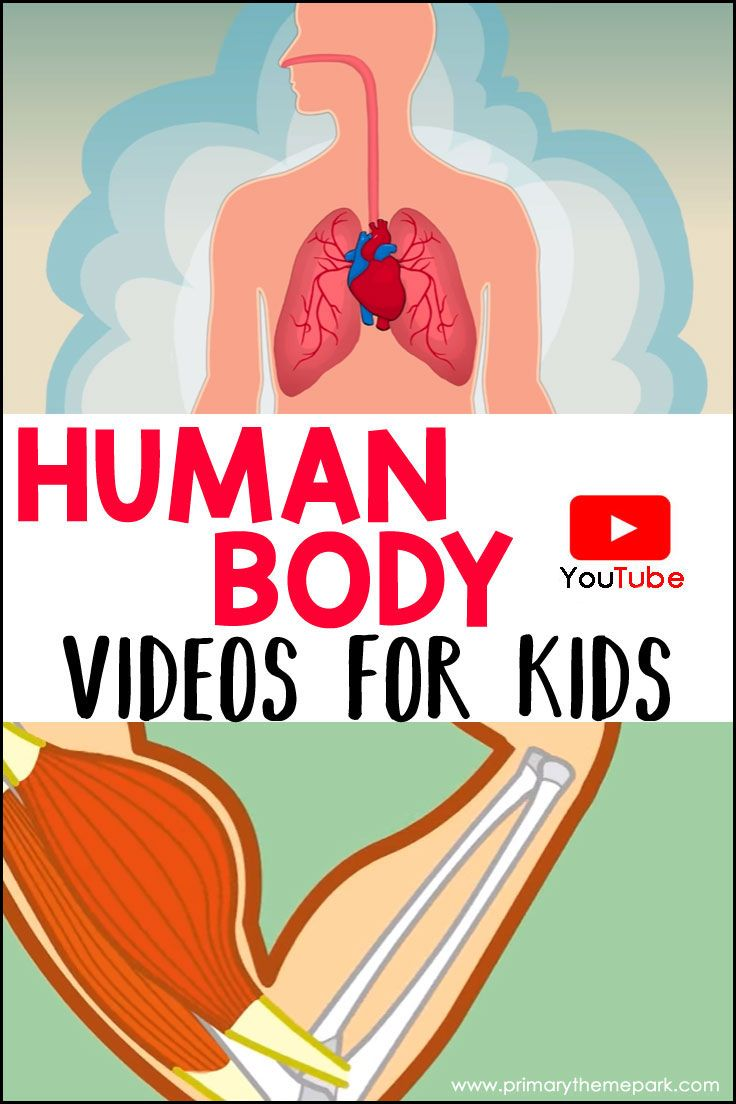 Human Body Videos for Kids
