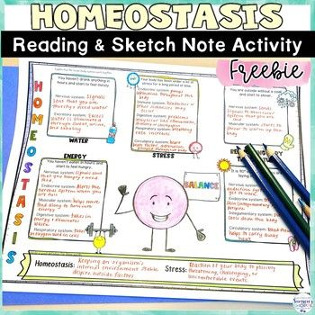 Homeostasis Free Human Body Worksheets and Sketch Note Graphic Organizers