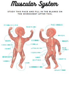 Anatomy Body Systems Labelling Worksheets for Kids