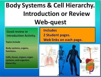 Cell organization hierarchy & human body systems webquest intro review With KEY
