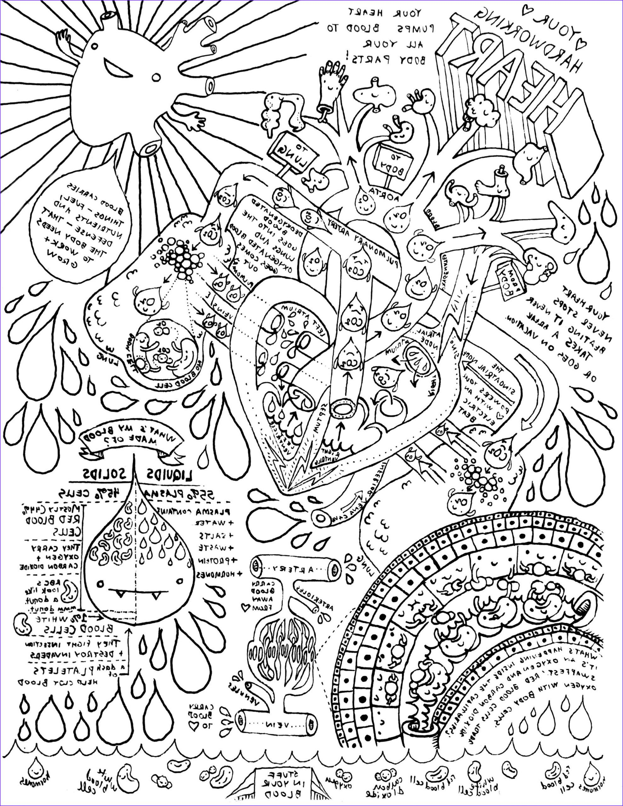 13 Cool Anatomy and Physiology Coloring Workbook Body Tissues graphy Coloring Page for Kids