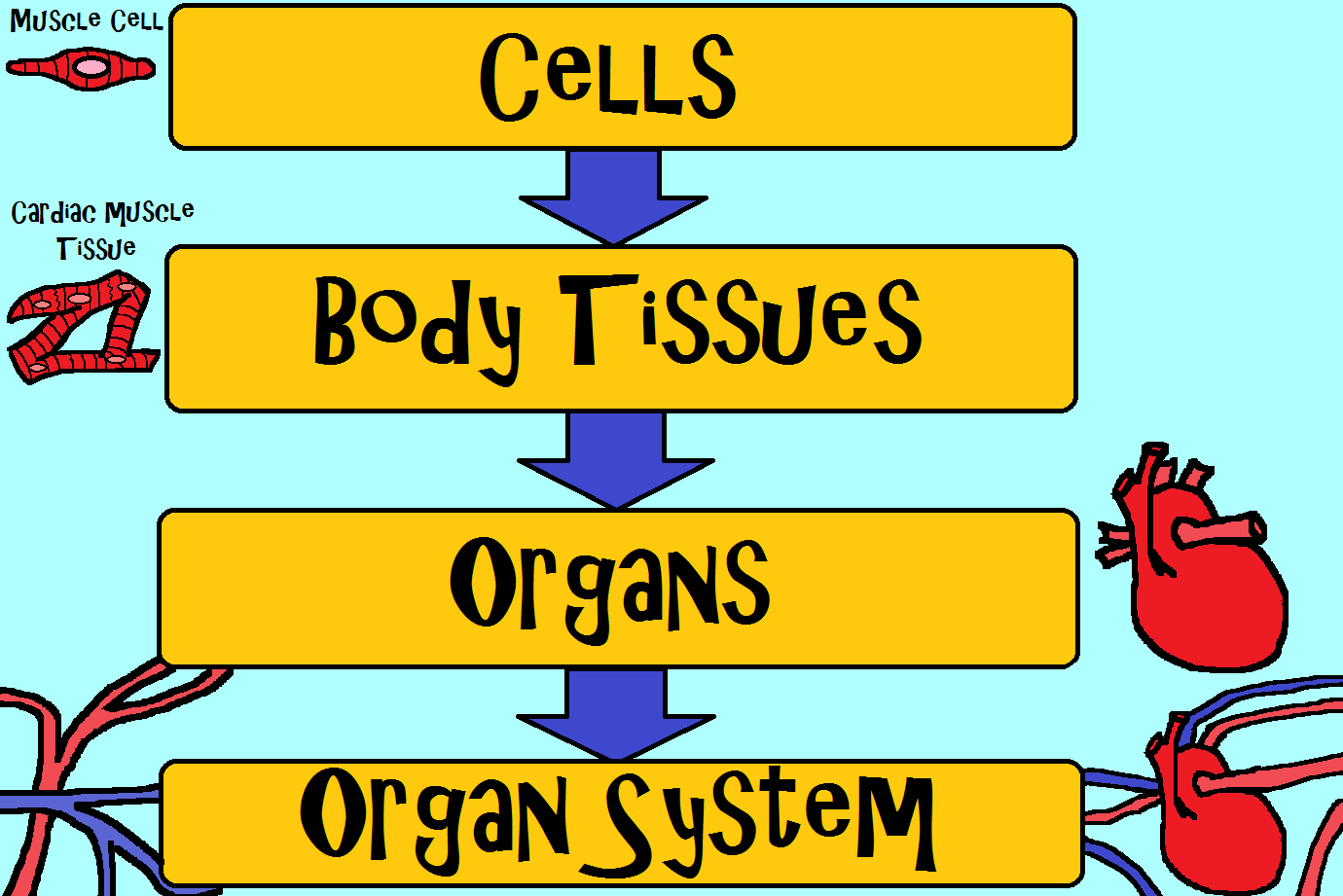 OLD VIDEO Human Body Systems The 11 Champions
