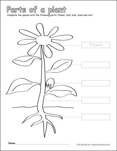 Plant Anatomy Coloring Pages