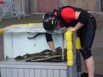 Grabbing bags from an eel tank