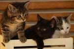 Picture of 3 kittens