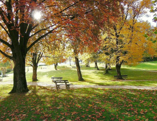 autumn landscape with a bench sat under tree