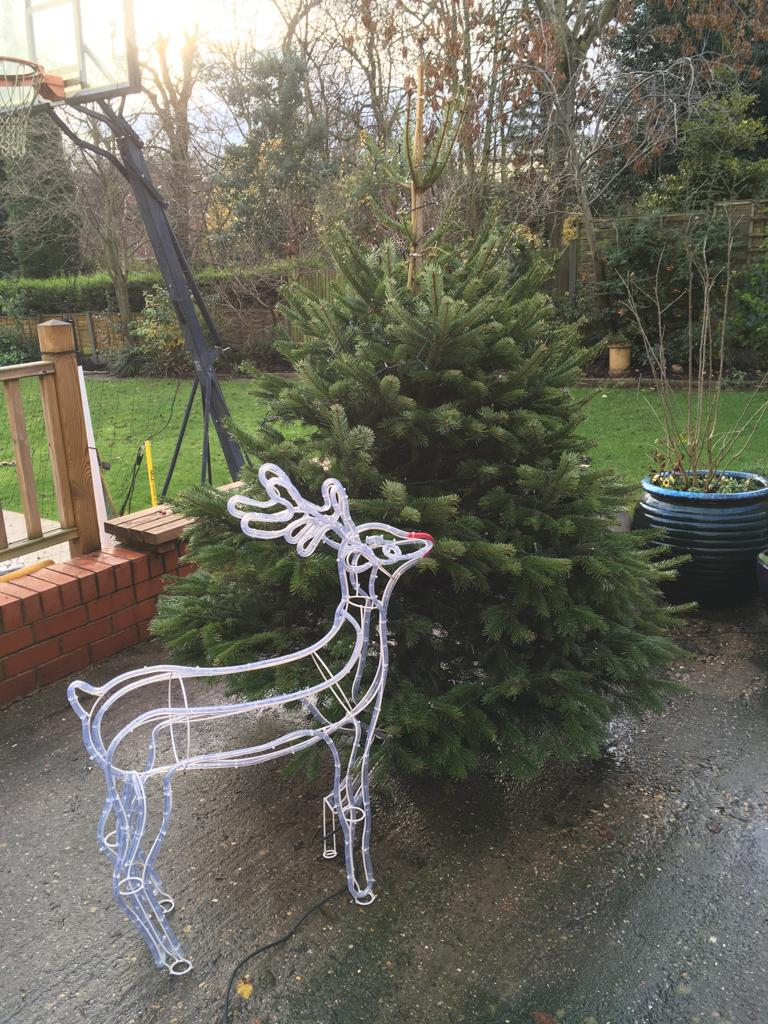 A real Christmas tree in the garden