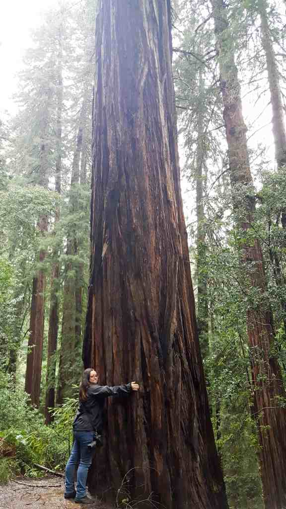 Beautiful Trees - Tips for Visiting Muir Woods National Monument