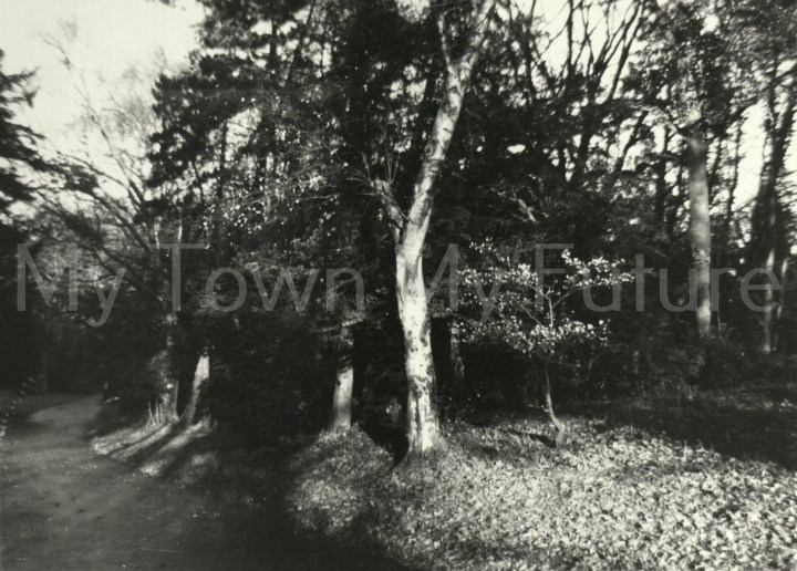 Stewart Park - View of trees