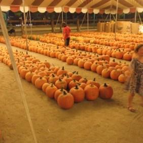 Besuch einer Pumpkin Patch in Kalifornien
