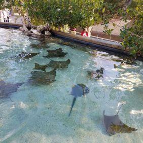 Wo finde ich das Aquarium of the Pacific