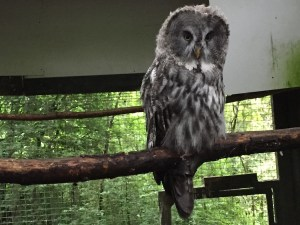 The Festival Park Owl Sanctuary