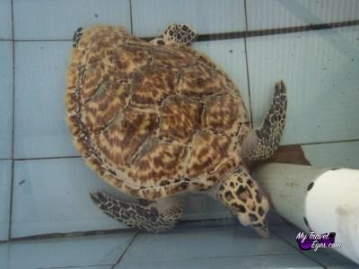 Conservatoire de tortues