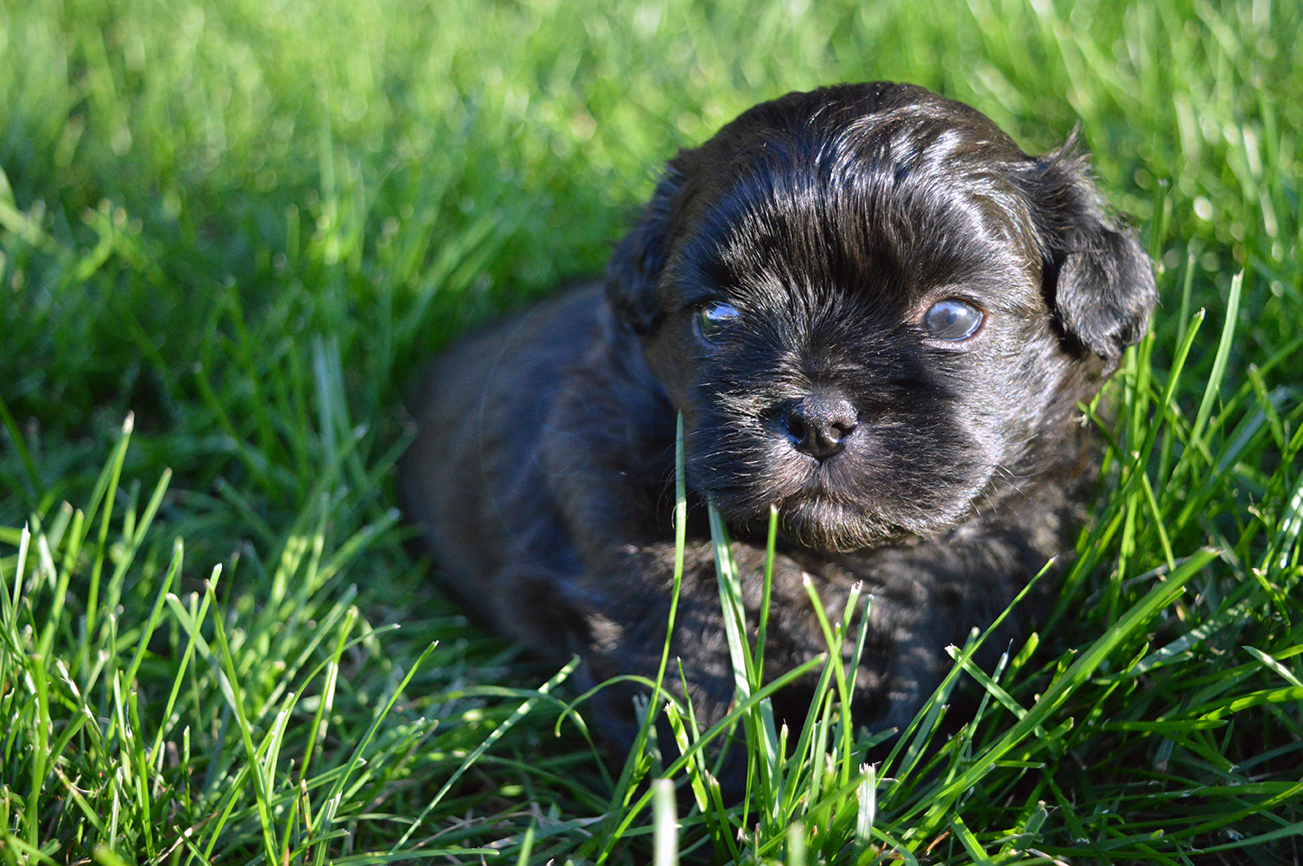 Puppy's first time in the Grass