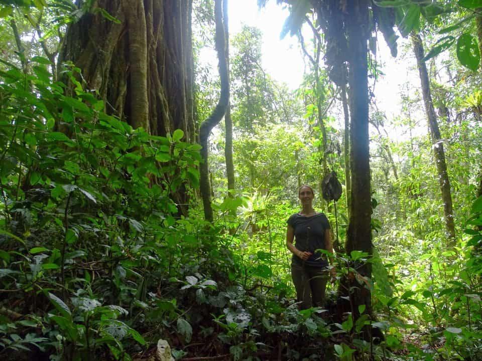 Kedah Sumatra