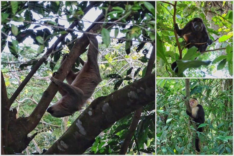 wildlife Manuel Antonio