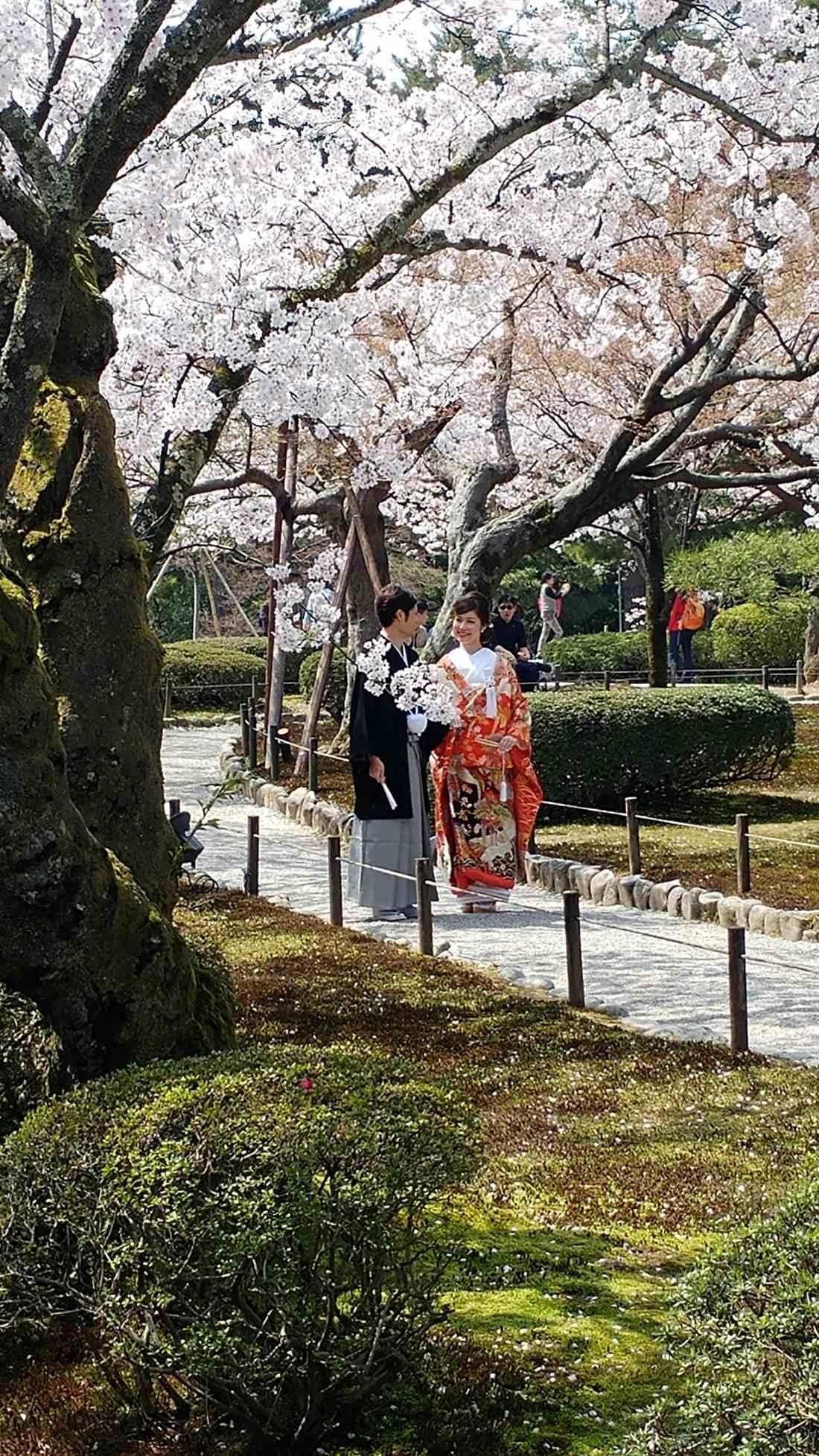 geisha in giappone
