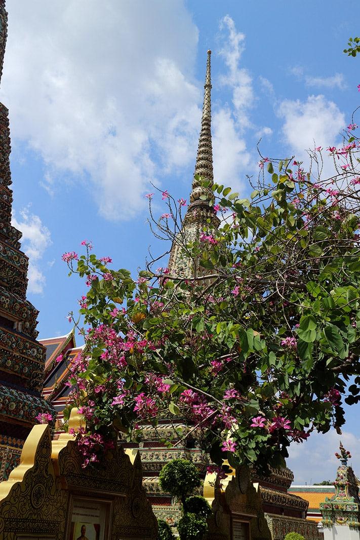 il-clima-a-bangkok