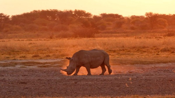 Roadtrip to Botswana - Khama Rhino Sanctuary