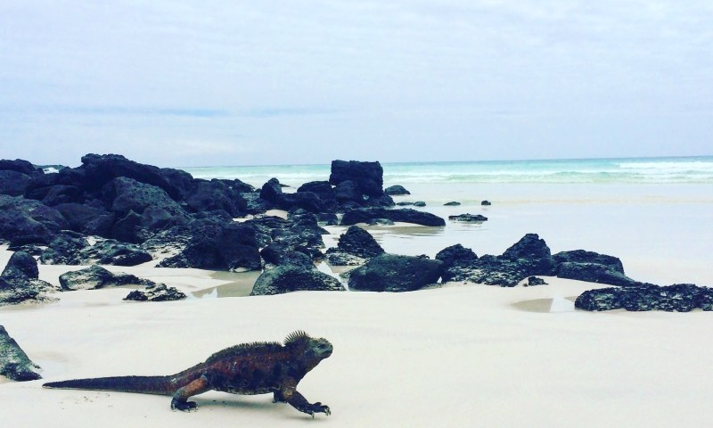 What no one tells you about the Galapagos Islands