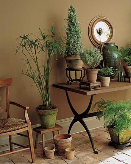 Garden Therapy! Hardy Houseplants! - Tribute Journal