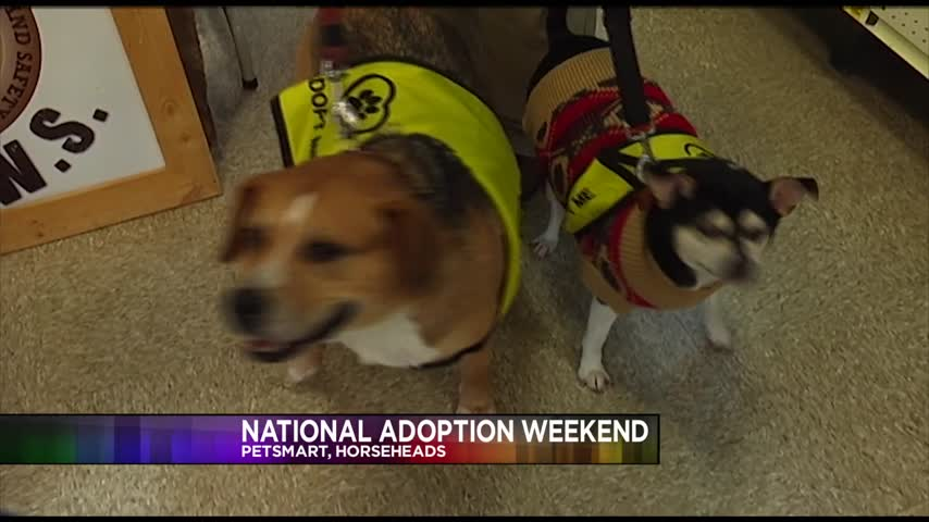 PetSmart Celebrates National Adoption Weekend_83399035
