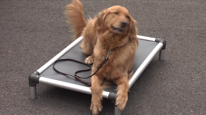 Animal Organizations Surprise Shelter with 50 Dog Beds_34622933
