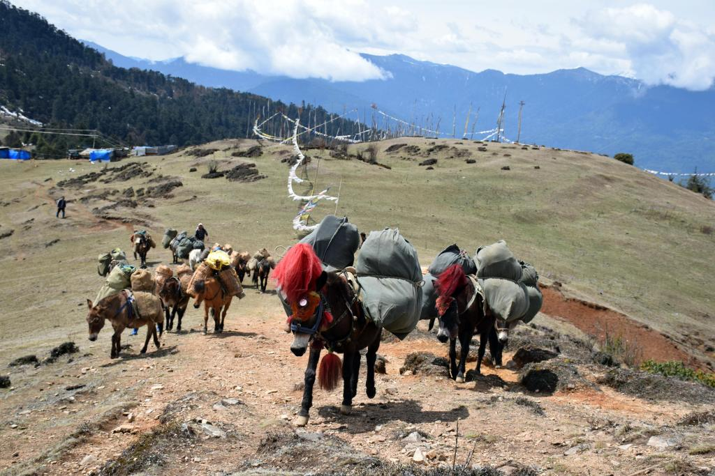 Druk path, bhutan, trail