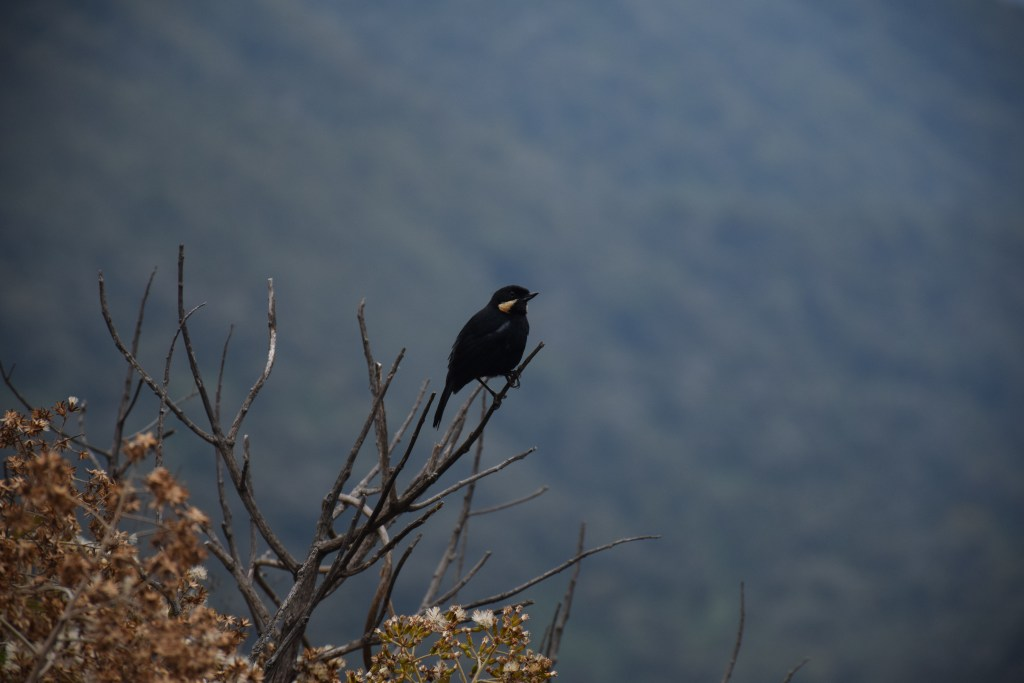 inca trail, little bird, hiking, adventure