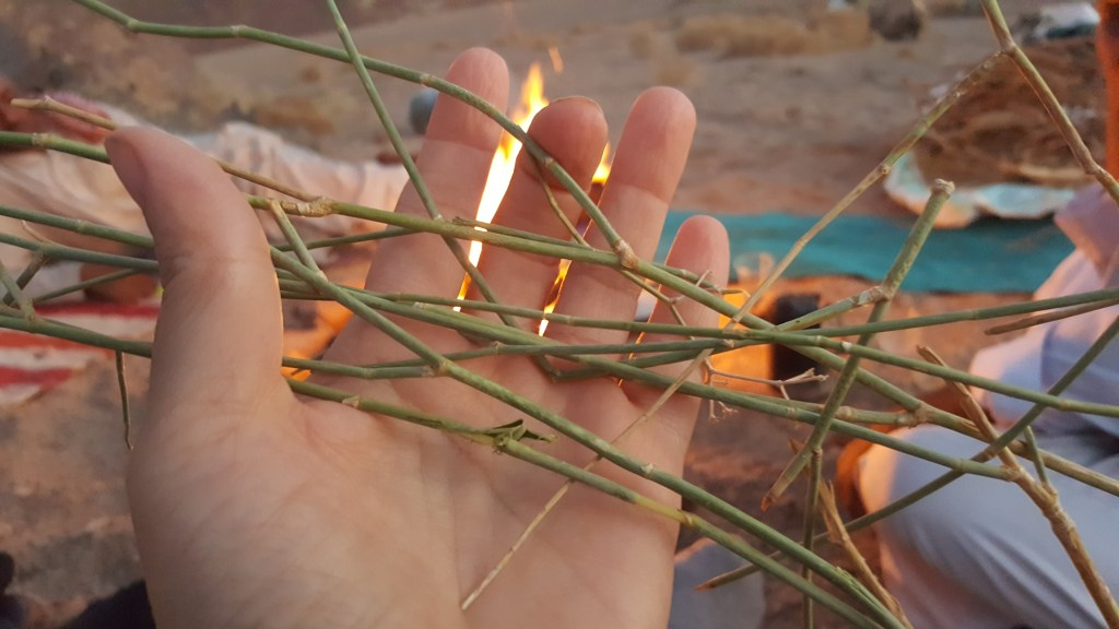 Herbal, infusion, Bedouin, flora, Sinai trail, Egypt, medicinal