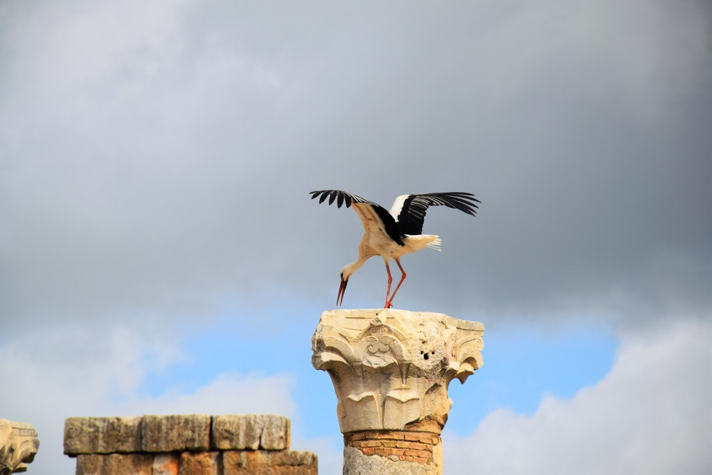 Volubilis, Morocco, Roman cities, stork, column, nest, ancient civilizations, spring