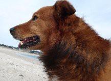 Mon chien Douglas