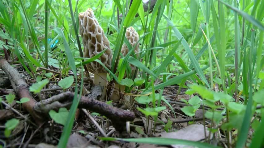 2017 Mushroom Hunting Tips