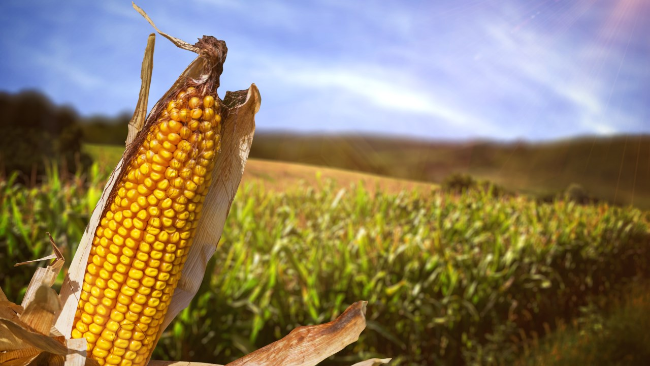 agriculture_1534444952441.jpg