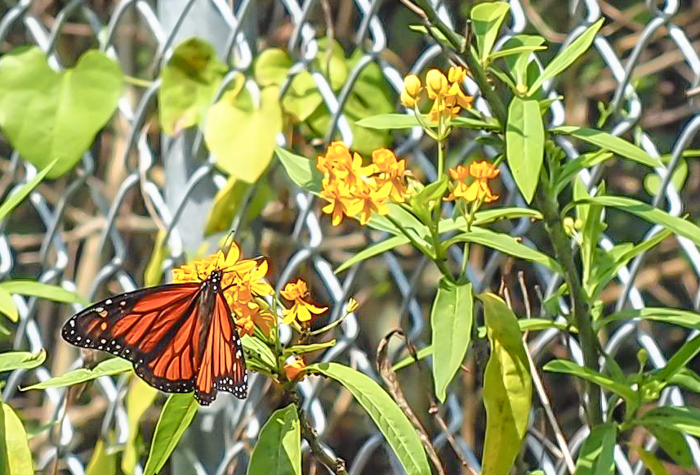 Tampa's Manatee Viewing Center | Apollo Beach, Tampa, Florida | Tampa Electric Company | TECO | Florida Manatees | Florida wildlife | Free things to do in Tampa | What to do in Tampa | Fun things to do in Tampa | butterfly garden