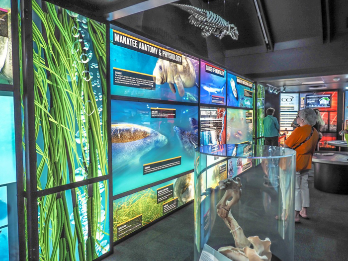 Tampa's Manatee Viewing Center | Apollo Beach, Tampa, Florida | Tampa Electric Company | TECO | Florida Manatees | Florida wildlife | Free things to do in Tampa | What to do in Tampa | Fun things to do in Tampa | education center