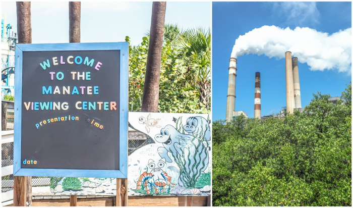 Tampa's Manatee Viewing Center | Apollo Beach, Tampa, Florida | Tampa Electric Company | TECO | Florida Manatees | Florida wildlife | Free things to do in Tampa | What to do in Tampa | Fun things to do in Tampa | welcome sign