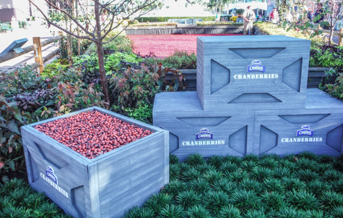 Foodie and the Feast // 20 Countries in 1 Day at the Epcot Food & Wine Festival | EPCOT Food & Wine Festival Ocean Spray cranberry bog