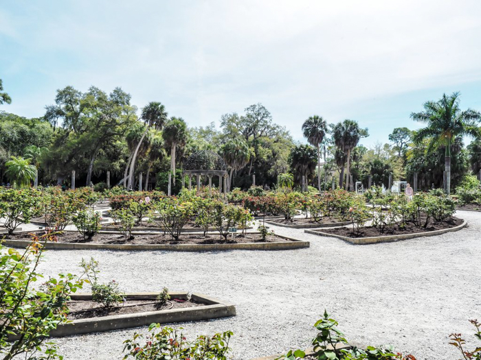 The Ringling // Getting My Italy Fix in Florida | Ringling | Ringling art museum and sculpture garden | Sarasota, Florida | The Ringling art museum | Rose garden