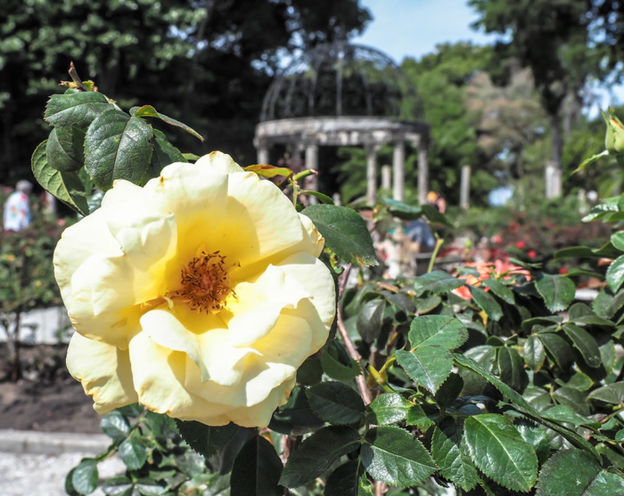 The Ringling // Getting My Italy Fix in Florida   Ringling   Ringling art museum and sculpture garden   Sarasota, Florida   The Ringling art museum   Ringling rose garden