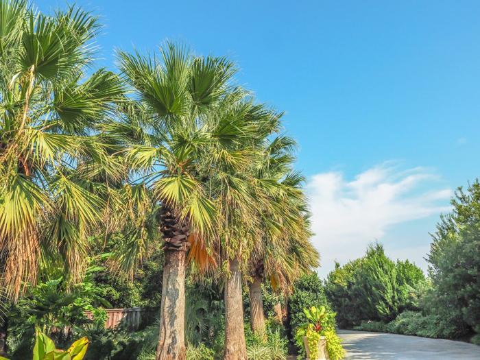 Dallas Arboretum and Botanical Garden in Dallas, Texas // Dallas CityPASS