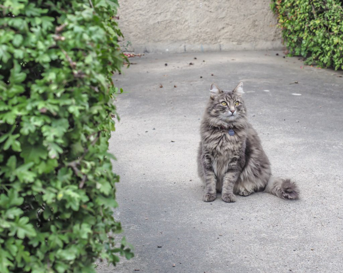 24 hours in Oslo, Norway -- Cat at The Norwegian Folk Museum