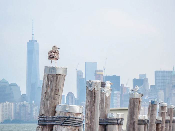 Visiting the Statue of Liberty, New York City // liberty island dock