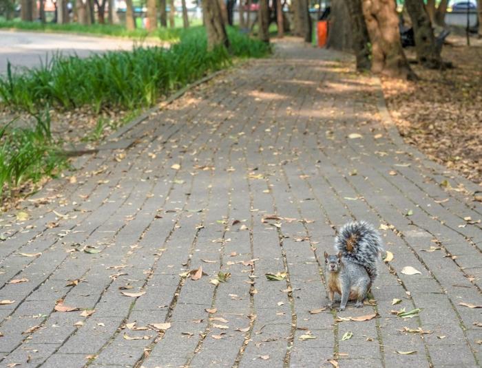 17 Things That Shocked Me in Mexico | Mexico City, Oaxaca de Juarez | squirrel