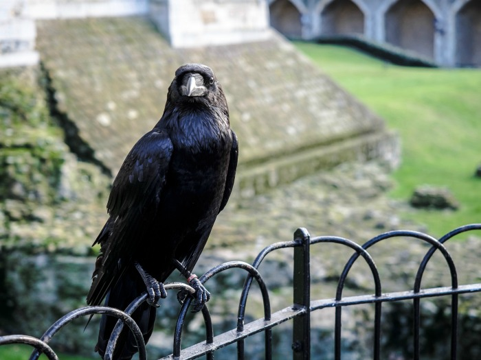 The Best 5-day London Itinerary for First-Time Visitors | London, England, United Kingdom | Tower of London, raven