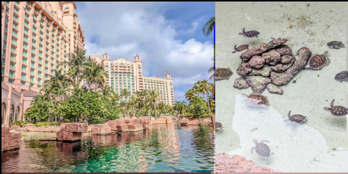 Do This, Not That // 2 Days in The Bahamas | Atlantis Royal Towers Resort | Where to stay in The Bahamas #fountain #bahamas #atlantis #honeymoon #caribbean #island #thebahamas #seaturtle