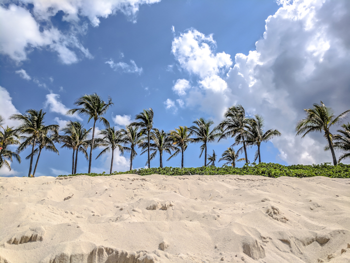 Do This, Not That // 2 Days in The Bahamas | Palm trees | Where to stay in The Bahamas #TheBahamas #Bahamas #honeymoon #Atlantis #caribbean #beachvacation #resort